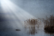 Wintry Metal Prints - Rays Of Light Metal Print by Joana Kruse