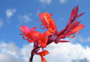 Flowers Against The Sky Prints - Reach for the Sky Print by Randy Rosenberger