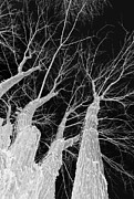 Spooky Night Prints - Reaching Branches Print by Glennis Siverson