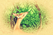 Bambi Prints - Reaching Print by Karol  Livote