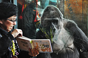 Gorilla Digital Art - Reading is Fundamental by Bill Cannon