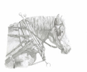 Percheron Drawings Posters - Ready Poster by Cathy Lester