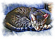 Kitten Prints Photo Framed Prints - Ready For Napping Framed Print by David G Paul