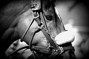 Tack Photos - Ready by Lori Seaman