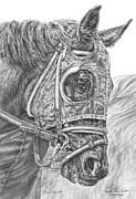 Thoroughbred Drawings - Ready Set Go - Race Horse Portrait Print by Kelli Swan