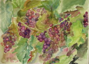 Winery Paintings - Ready to Pick by B Rossitto