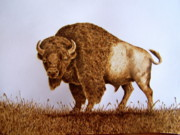 Bison Pyrography Originals - Ready to Rumble by Adam Owen