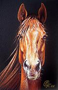 Thoroughbred Drawings - Ready to run by Elena Kolotusha