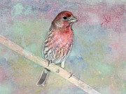 House Finch Framed Prints - Ready to Sing My Song Framed Print by Betty LaRue