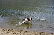 Dog Photographs Photos - Really enjoying my day at the lake by John  Greaves