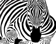Dave Digital Art Framed Prints - Reclining Zebra Framed Print by Dave Gordon