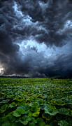 Rain Storms Framed Prints - Reclusive Framed Print by Phil Koch
