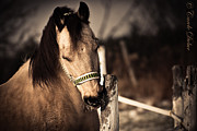 Horse Photography Photos - Recreation by Carole Dubuc