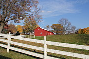 Red Amish Barn Print by Donna Bosela