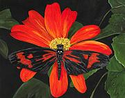 Sue Ervin - Red And Black Butterfly
