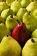 Foodstuff Posters - Red and green pears  Poster by Garry Gay