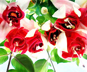 Fuschia Painting Posters - Red and White Fuschias Poster by Elaine Plesser
