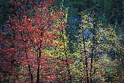 West Fork Posters - Red and Yellow Leaves Abstract Horizontal Number 1 Poster by Heather Kirk