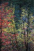 West Fork Framed Prints - Red and Yellow Leaves Abstract Vertical Number 2 Framed Print by Heather Kirk