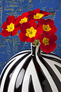 Bright Blue Framed Prints - Red And Yellow Primrose Framed Print by Garry Gay