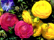 Ranunculus Paintings - Red and Yellow Ranunculus Flowers by Elaine Plesser