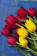 Blue Table Framed Prints - Red and yellow tulips Framed Print by Garry Gay