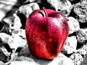 Red Photo Posters - Red Apple Poster by Karen M Scovill