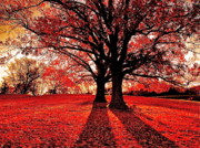 Autumn Landscape Digital Art - Red Autumn by E Robert Dee