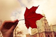 Old Map Photo Originals - Red autumn by Elizaveta Shagliy