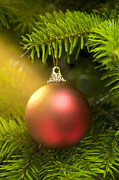 Advent Framed Prints - Red ball in a real Caucasian Fir Christmas tree Framed Print by Ulrich Schade