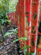 Red Bamboo Print by Dolly Sanchez