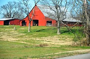 Laurie Adams - Red Barn - Tennessee