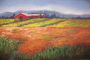 Sheliah Halderman - Red Barn In Field