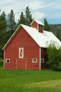 Montana Mixed Media - Red Barn Montana by Diane  Greco-Lesser