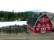 Grazing Snow Prints - Red Barn Print by Will Borden