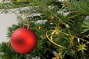 Creativity Art - Red bauble on Christmas tree by Sami Sarkis