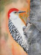 Woodpecker Paintings - Red bellied male woodpecker by Sibby S