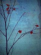 Red Berries Blue Sky Print by Tara Turner