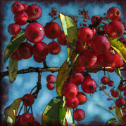 Original Art By Colleen Kammerer Posters - Red Berries Poster by Colleen Kammerer