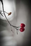 Monochrome Prints - Red Berries Print by Mandy Tabatt