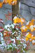 Snow Scenes Digital Art Metal Prints - Red Berries of Winter Metal Print by Emily Stauring
