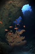 Water In Cave Prints - Red Bigeye Fish And Sea Fan In An Print by Mathieu Meur