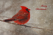 Christmas Greeting Framed Prints - Red Bird In Snow Christmas Card Framed Print by Lois Bryan