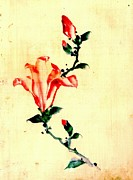 Sketchbook Photo Prints - Red Blossom with Buds 1840 Print by Padre Art