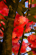 Blooming Digital Art Prints - Red Blossomed Tree Print by Bonnie Bruno
