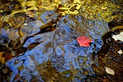 Oak Creek Prints - Red Blue and Gold Print by Robert Harmon