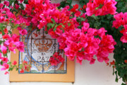 Gaspar Avila Framed Prints - Red bougainvilleas Framed Print by Gaspar Avila