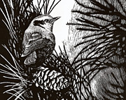 Scratchboard Paintings - Red Breasted Nuthatch by Lorraine Marian Kenny