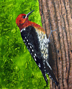 Woodpecker Prints - Red Breasted Sapsucker Print by Dee Carpenter