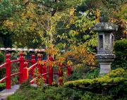 Japanese Lanterns Framed Prints - Red Bridge & Japanese Lantern, Autumn Framed Print by The Irish Image Collection